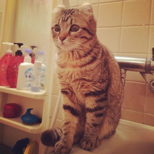 風呂を自ら開けて侵入し、湯船のヘリに座り pic.twitter.com/4iHjUPbsxN