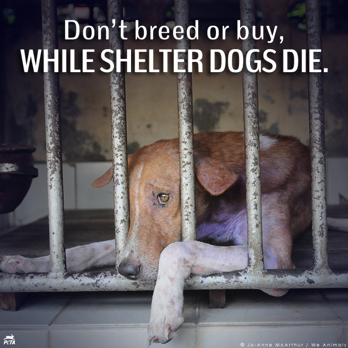 RT @peta: Breeding & promoting purebred dogs while MILLIONS of homeless animals are DYING in shelters is WRONG. RT if u agree! http://t.co/…