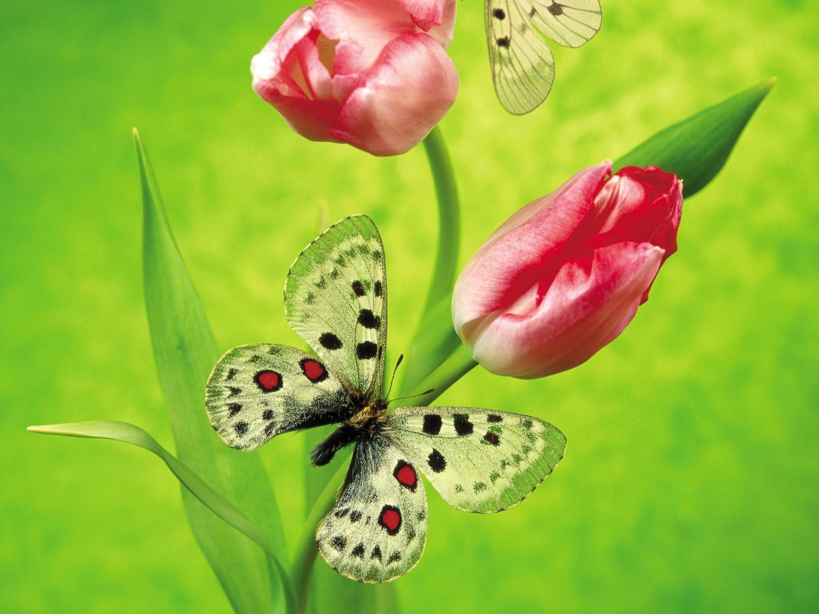 Открытки с 8 марта с бабочками, яндекс