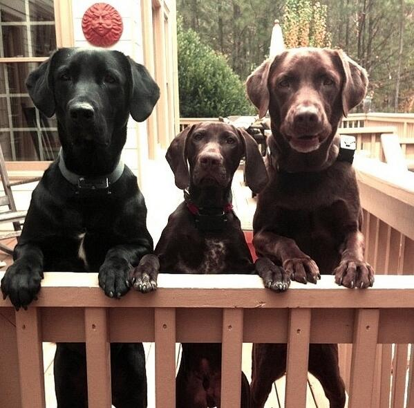 So cute! RT @SoDogGoneFunny: Loveable Dogs: We're Ready To Go! | #dogs #puppies #pets [4b030] http://t.co/XSMApWdaKA
