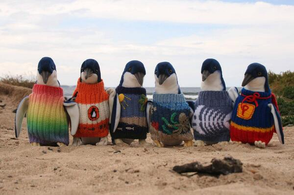 Group in Australia calls on knitting enthusiasts to make jumpers for sick penguins http://t.co/gJWJkmUvII http://t.co/oR52Ez6QXF