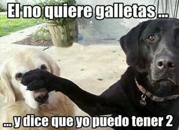 "MARIANO HEREDIA ⚜ on Twitter: ""Me gustan los memes de perritos ..."