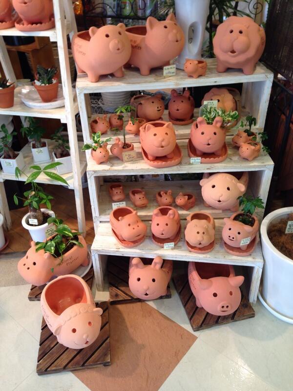 札幌ファクトリーで可愛い植木鉢があった http://t.co/W880Ipcfa0