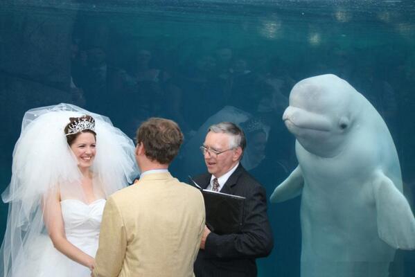 คู่รักแต่งงานกันที่อควาเรี่ยม มีสักขีพยานที่น่ารักมาก :3  (Pic : http://t.co/fDHDS3WTsU) http://t.co/tpBwWtrL9E