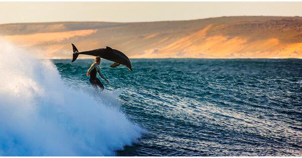 Hey @MeredithFrost: A dolphin and surfer riding a wave off the coast of #Australia. PHOTO by Matt Hutton #photography http://t.co/Om7cxch1x3