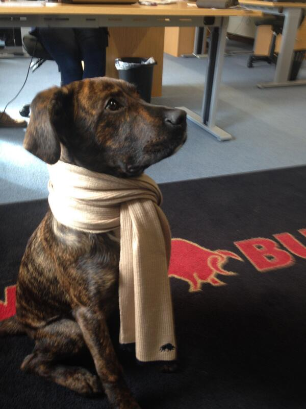 This is Theo the Raging Bull - Dog #puppy http://t.co/ujU46lcrnb