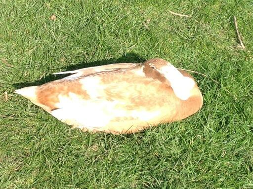 Duck in the sun http://t.co/Ze7Nul8749