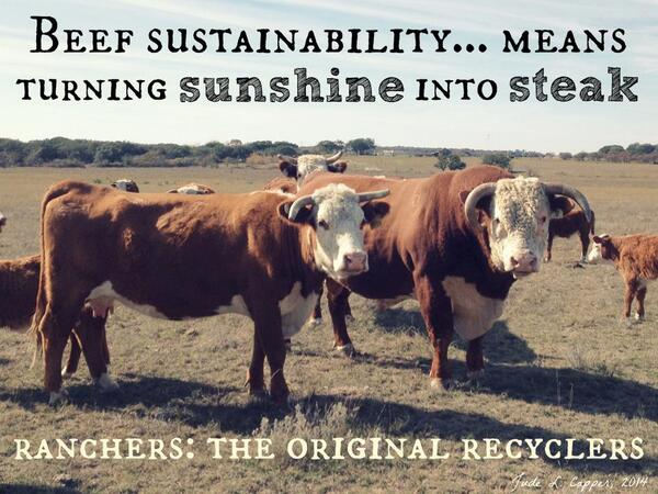 Steak Quotes Quotesgram: Joe Stults (@StultsFarm)