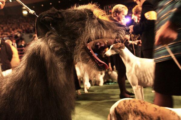 Don't eat that poor pup! Fun photo for #AnimalConnections gurus, courtesy @WSJ @landonnordeman http://t.co/qHTUkevgwq http://t.co/CrDLrokovH