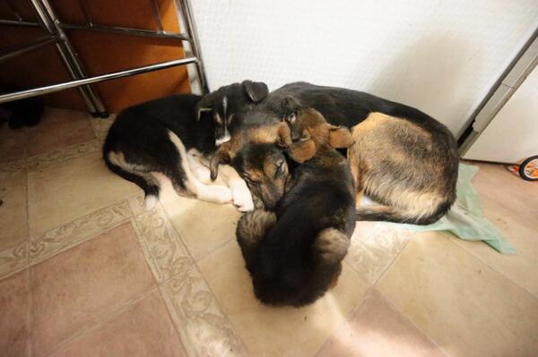 One last family nap before the big move to a new life. Bye @Sochi2014 @HumaneSociety @aeroflot @guskenworthy http://t.co/4Rq9T7as20