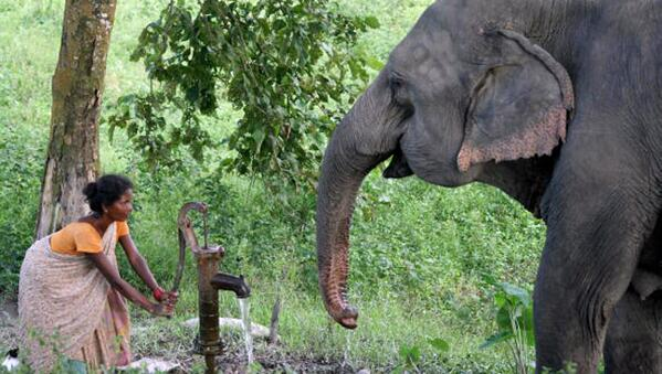 Elephant smashes house, then saves crying baby http://t.co/h5XwF20CLU http://t.co/JVZcgAFcFL