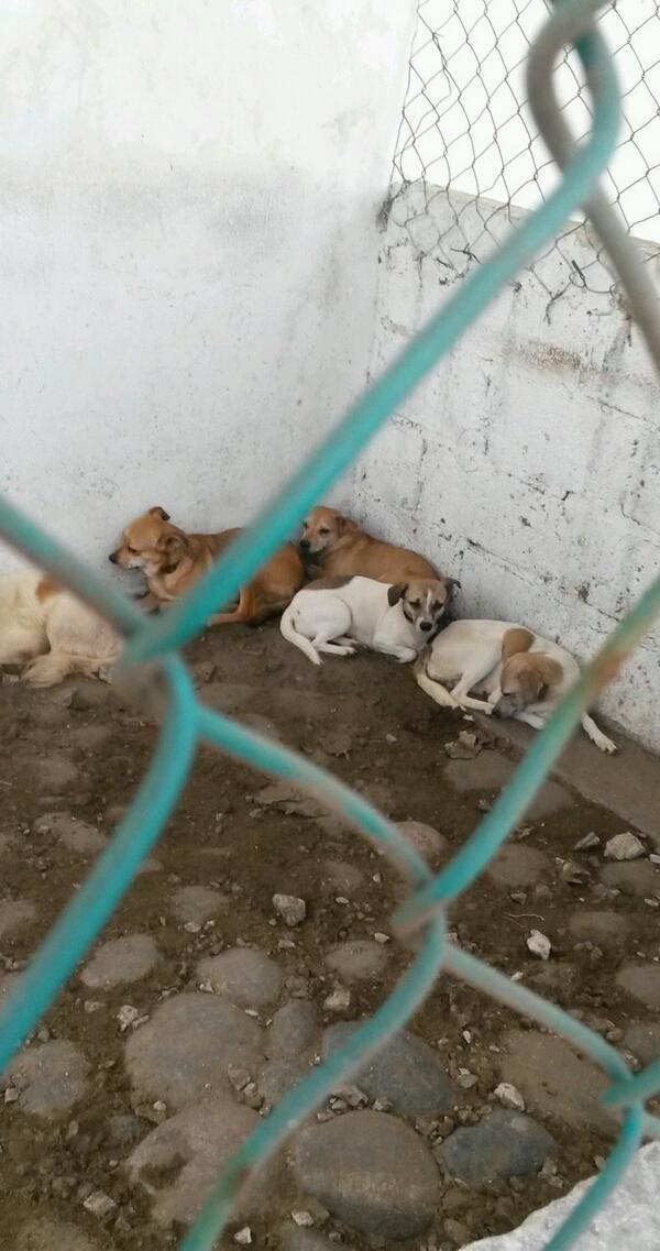 ADOPTA!! ELLOS TE NECESITAN. ..visita el Centro de Salud Animal y adopta un perrito!! RT http://t.co/Dw3SLt1etc