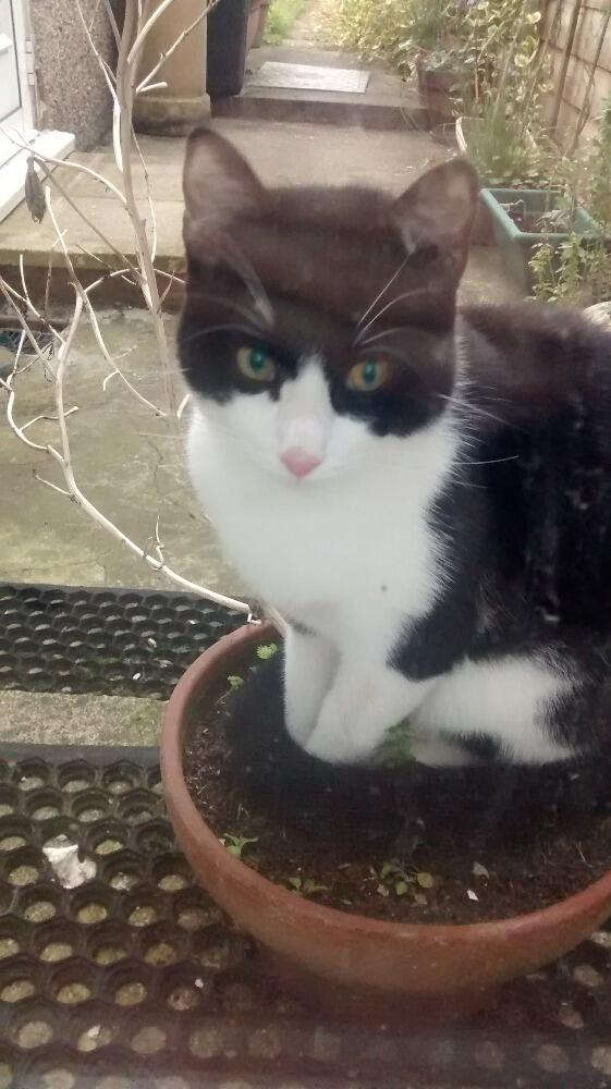 plant cat! RT @gdb_: Anyone missing a young b&w cat in #tooting area? Turned up last night and again this morning. http://t.co/ERdT2pmdeY