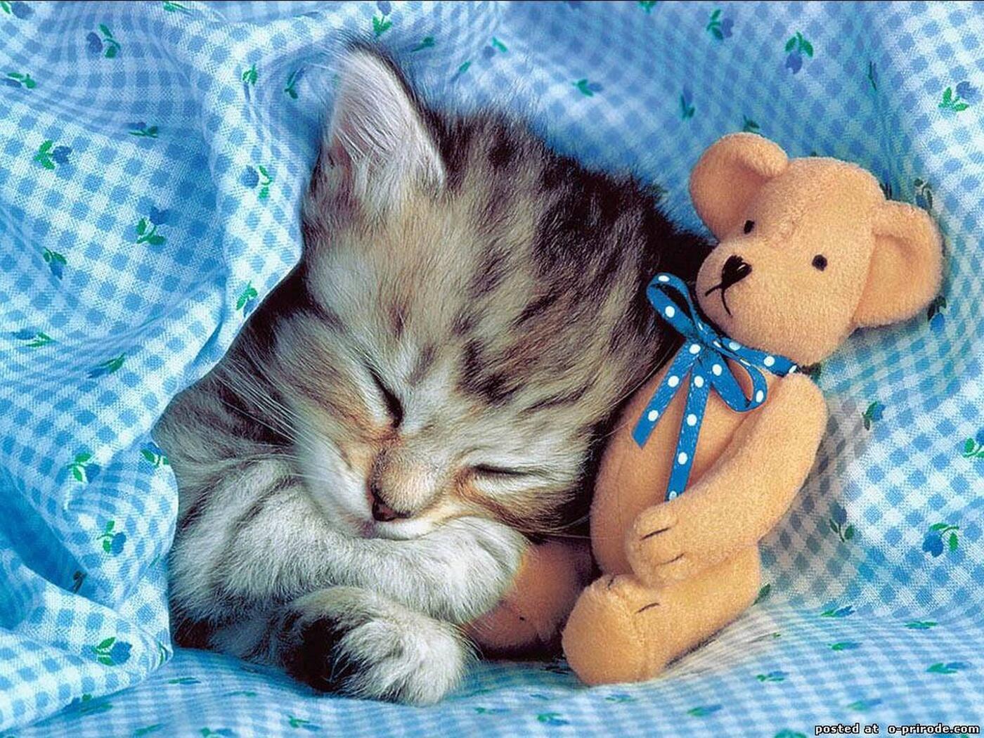 Открытки приятных сновидений с котятами, открытки елочки