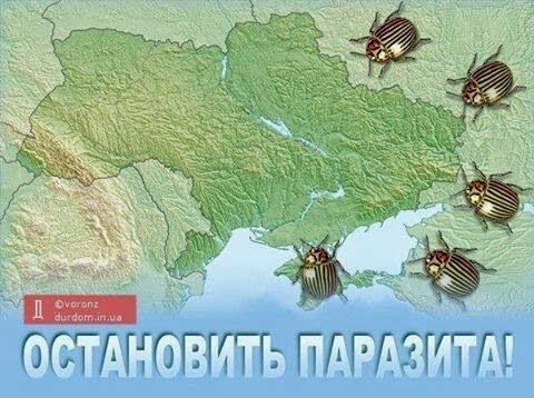 """""""Мы с Кубани приехали. Своих в Крыму защищать. Пока не знаем от кого"""", - казаки Аксенова рассказали о своих задачах - Цензор.НЕТ 2660"""