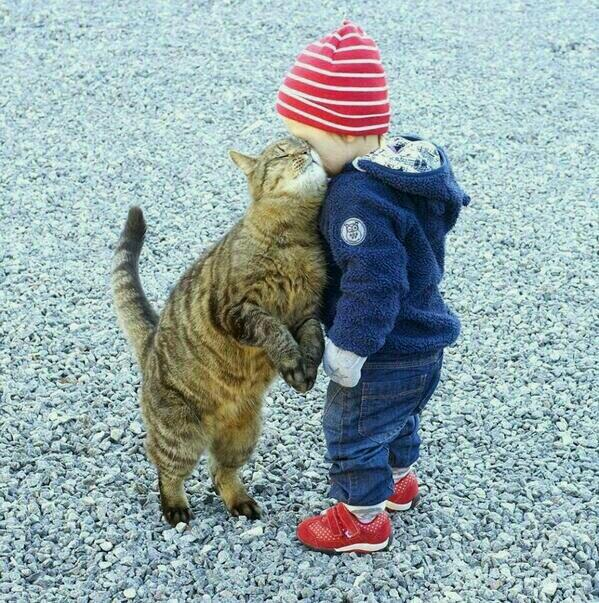 Adorable #cats love :-) http://t.co/KGeFxm4UV9 RT @LKSWMICHAEL @LeontineCab @k9cavi @AmyRoseKathryn