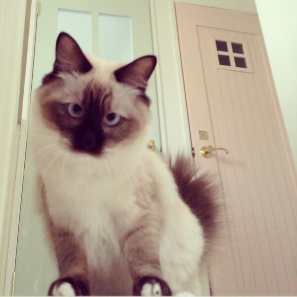 (*ΦДΦ)猫!!! pic.twitter.com/AihbMl4yC2