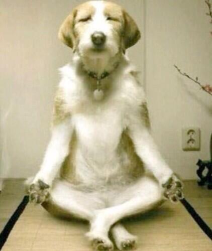 """Ommmmmmm.""  *Realises Doggie Heaven is actually Postman Hell.  ""Ommmmmmm."" http://t.co/RqcnQpZoPQ"