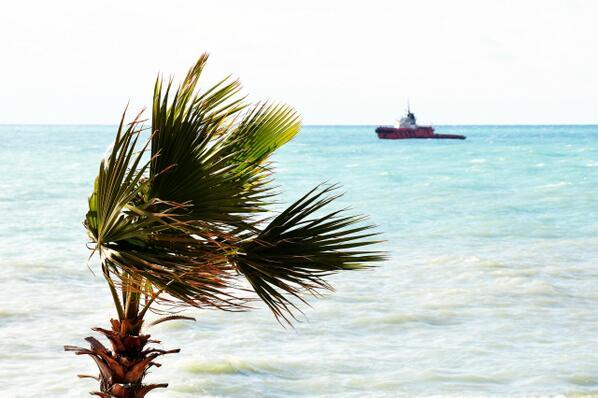 Ветер. А также #пальма #море #солнце #юг #скороЛето Скорей бы)) http://t.co/UE40GHVUUj