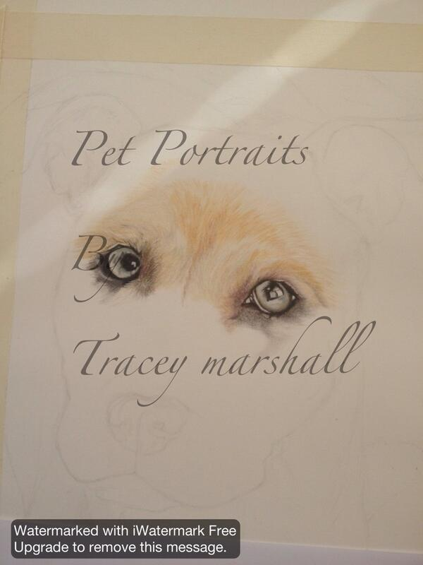 One successfully completed pet portrait,love this dogs eyes.... See my fb page 'Pet Portraits By Tracey Marshall' http://t.co/XRgIAu2y8z