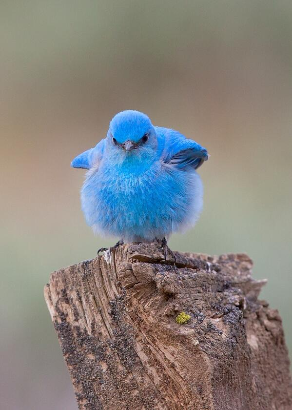 Is this the real twitter bird ?                          I think we should be told ! http://t.co/XHmqQGDGeJ