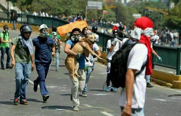 Hundreds of teargas cannisters have been shot to protesters in #Venezuela.Dog is being rescued by student in #Caracas http://t.co/If7opbyqi7