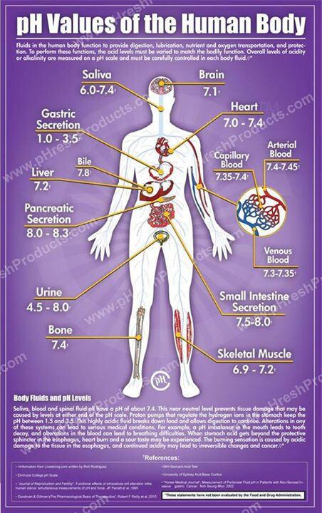 Worldofchemicals On Twitter   U0026quot Ph Value Of Human Body