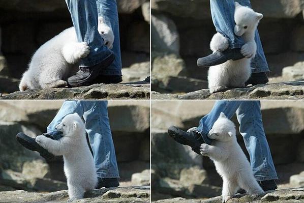 凶悪なクマに襲われる人間 pic.twitter.com/nUXzuooxyb