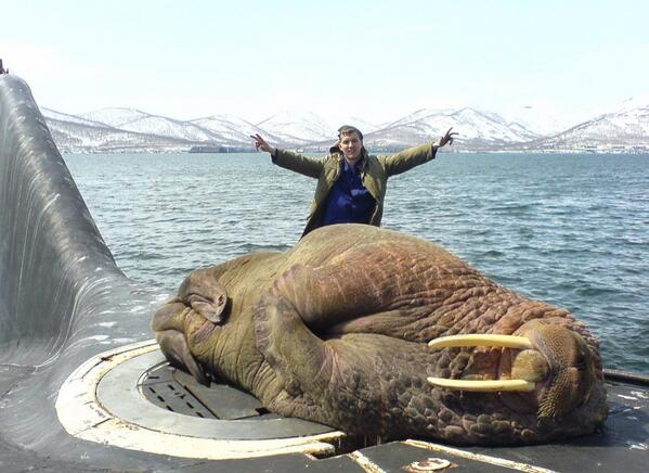 This is what happens when a walrus falls asleep on a surfacing submarine... http://t.co/BhWQlNb82X