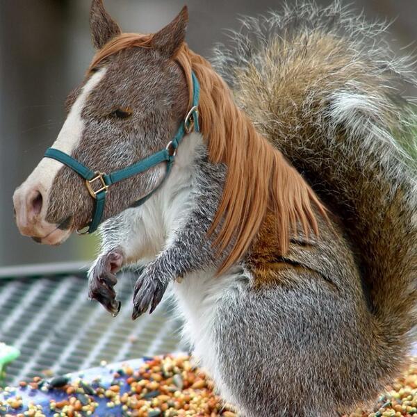 fotomontaggi di animali