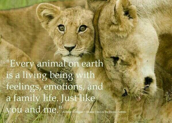 Wright Thurston On Twitter Every Animal On Earth