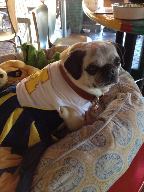 We just met the legendary @TrixieThePug! #pugsformichigan #mgoblue http://t.co/ItxZY7QgLd