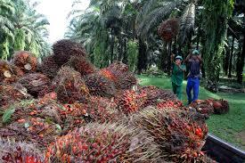 Specialty Fats Indonesia  http://t.co/9C0vqfRC90 #Greenpeace #Forests #Rainforest #Health #Indonesia #PalmOil http://t.co/b6hUaU6yc4