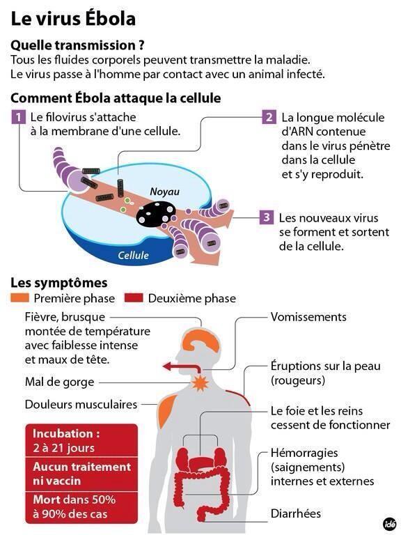 Fièvre Ébola - Afrique de l'Ouest - 2014  BjfTWgvCIAAW0H3
