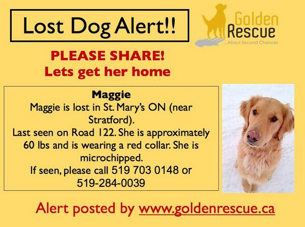 LOST DOG! Maggie is lost in St Mary's, Ontario near Stratford. Please retweet and let's get Maggie home! http://t.co/QMfopRKWBI