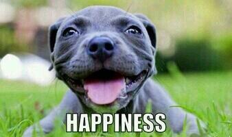 """@PitbullPatrol: ""Happiness!"" #PitPrecious http://t.co/UIr75KzoOX"""