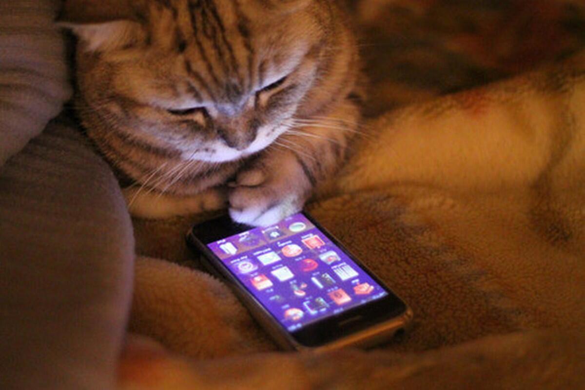 Смешные картинки смартфон