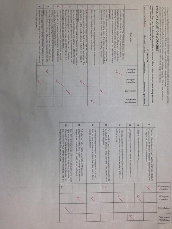 Ms Perling On Twitter Types Of Evolution Worksheet Answer Key Evolutiontest Getready Http T Co R50my4tk8r