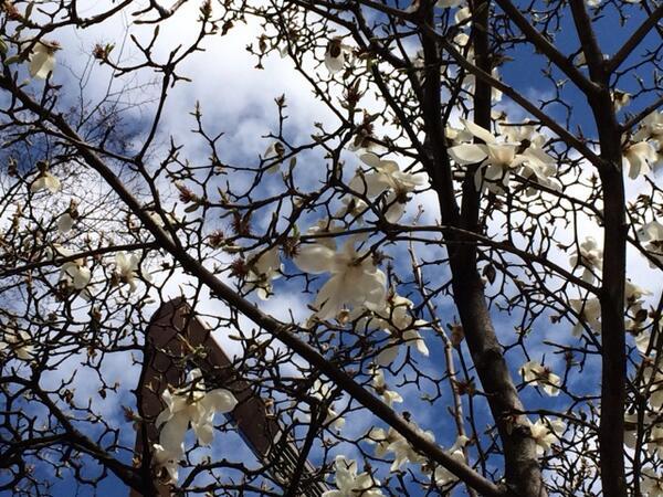 「桜」ではないですが、きれいだったので(#^.^#)@名古屋市栄 #ctv4u http://t.co/VEMuc67ExY