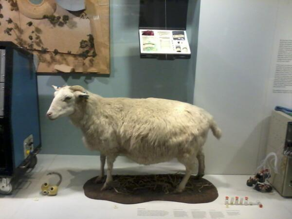 @sciencemuseum #MyMuseum, #Tracy, a transgenic sheep, a virtual science exhibition for #MuseumWeek http://t.co/lpEh7d0JRn
