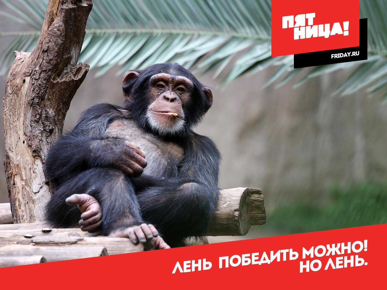 сибирская картинки пятница для вебер близкие или дальние