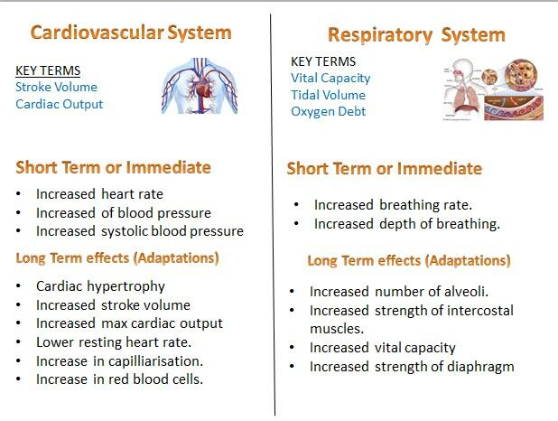 Differences in cardiovascular fitness that effect