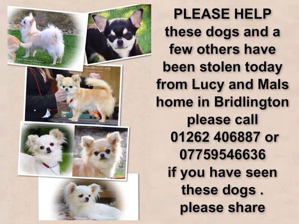 RT @DivaDogsUK: #STOLEN #chihuahua #Dog #HELP please RT RT RT! it takes 1 second and you could help bring these babies home safe. http://t.…