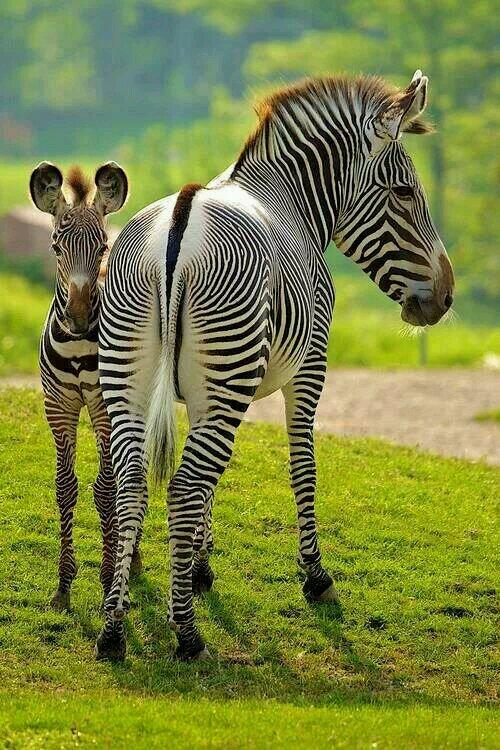 CACHORROS Y ANIMALES Bk951XvIEAAtJfy
