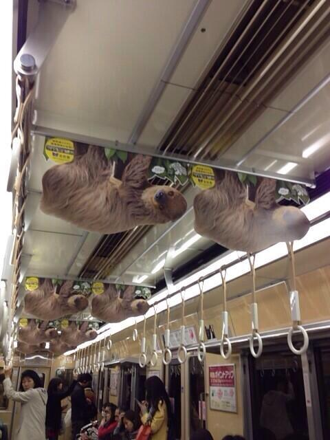 こういうの京王線でもやらないかな?多摩動物公園とかあるし @reicoon 今朝の御堂筋線の地下鉄の吊り広告、全部ナマケモノがぶら下がってたなあ pic.twitter.com/ag6zdpyJN8