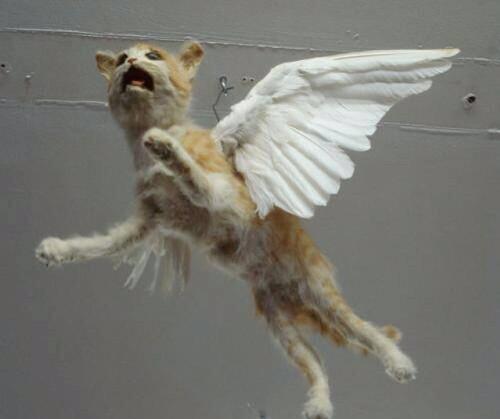 """I'm a bird! JK, I'm a Cat, April Fools!!!"" http://t.co/kmJbLte9J6"