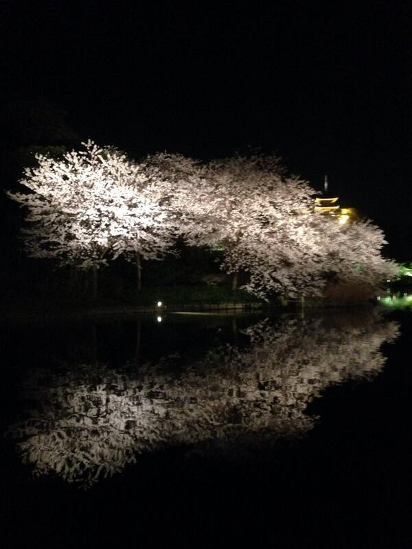 三渓園満開♪ http://t.co/2s9Q89fqzI