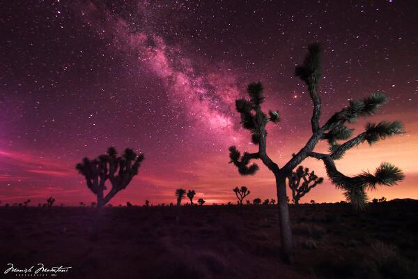 Manish Mamtani On Twitter Infrared Night Sky Joshua Tree