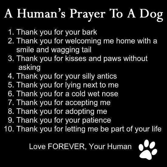 A Human's prayer to a dog.... https://t.co/5u7vOQg0VQ