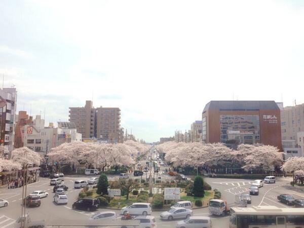 国立駅から見た大学通り #国立市 http://t.co/Xiy5PI6Wra